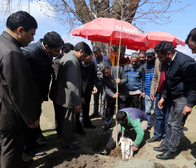 On Chinar Day, Chaar-Chinari gets new lease of life  Advisor Ganai plants Chinar saplings at famous island, says Kashmir safest place for tourists