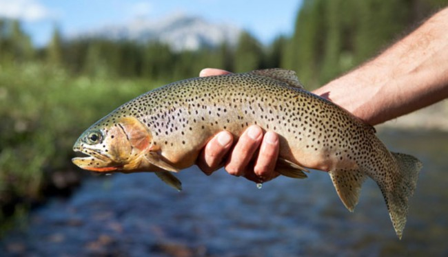 Illegal gravel, boulder extraction pose threat to trout
